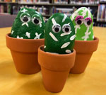 Pet rock cactus family